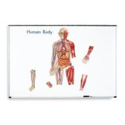 Magnetyczne ciało człowieka