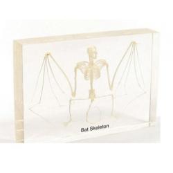 Szkielet  nietoperza   w...